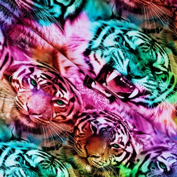 Neon Tiger Jersey